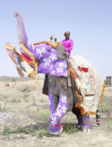 20 Elephants Decorated In Thousand Colors For The Jaipur Elephant Festival-7