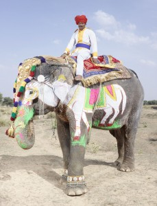 20 Elephants Decorated In Thousand Colors For The Jaipur Elephant Festival-9