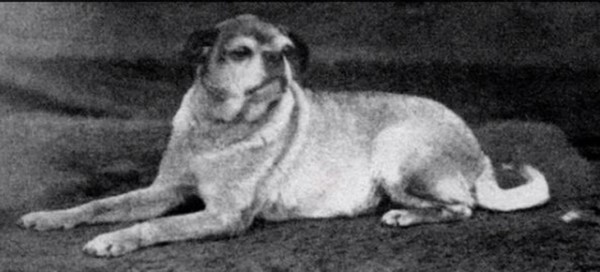 A pug in 1880, before selective breeding, and a pug now-26 Unusual Scenes That You Would Never See With Your Own Eyes-