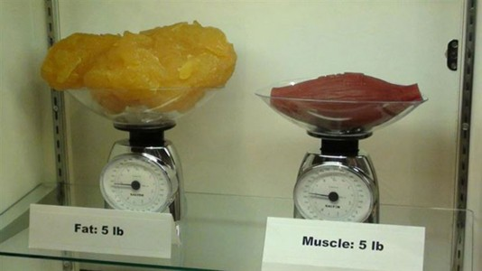 2 kilos of fat against 2 kilos of muscle