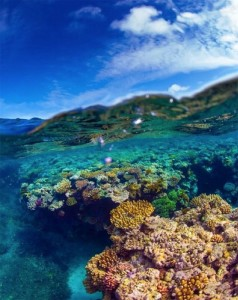 Towering Cliffs And Colorful Reefs Mesmerize You With Beauty Of Australian Coast-42