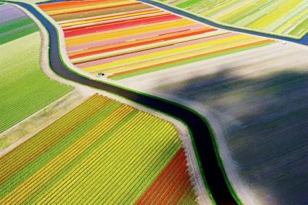 tulip fields near Voorhout, Netherlands