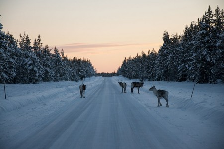 Discover Lapland, A Magnificent Nordic Region between Land And Ice-20