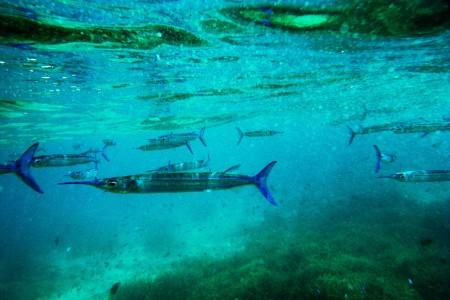 Palau islands-Discover This Gigantic Marine Sanctuary Where Wildlife Is Flourishing Away From Human Activity-12