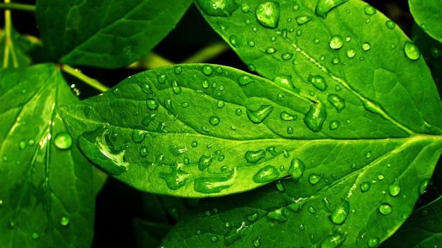Green Wallpaper 17