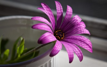 HD purple wallpaper image to use as background-33