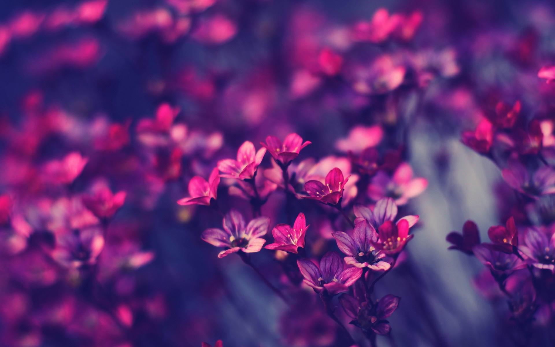 43 HD Purple Wallpaper/Background