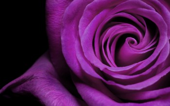 HD purple wallpaper image to use as background-42