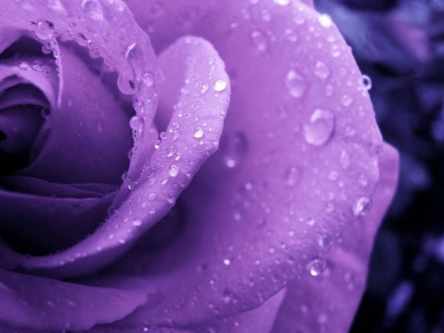HD purple wallpaper image to use as background-8