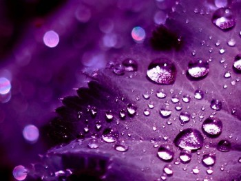 HD purple wallpaper image to use as background-9