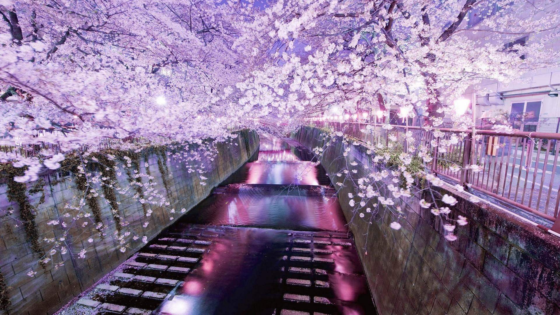 фото корея япония