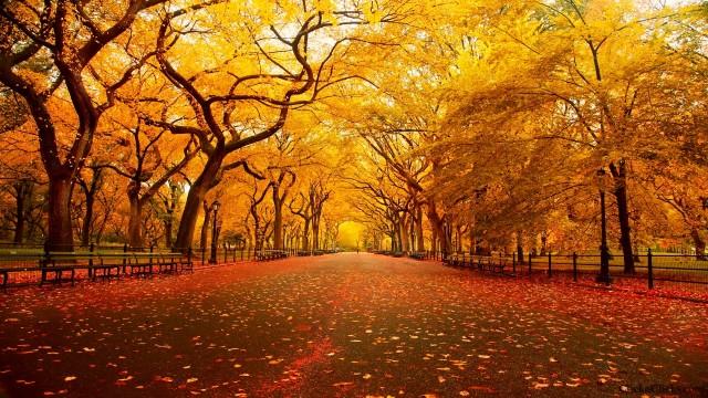 New York Wallpaper Background 37