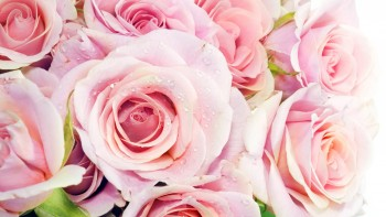 Pink wallpaper as background 30