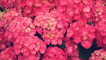 Pink wallpaper as background 33