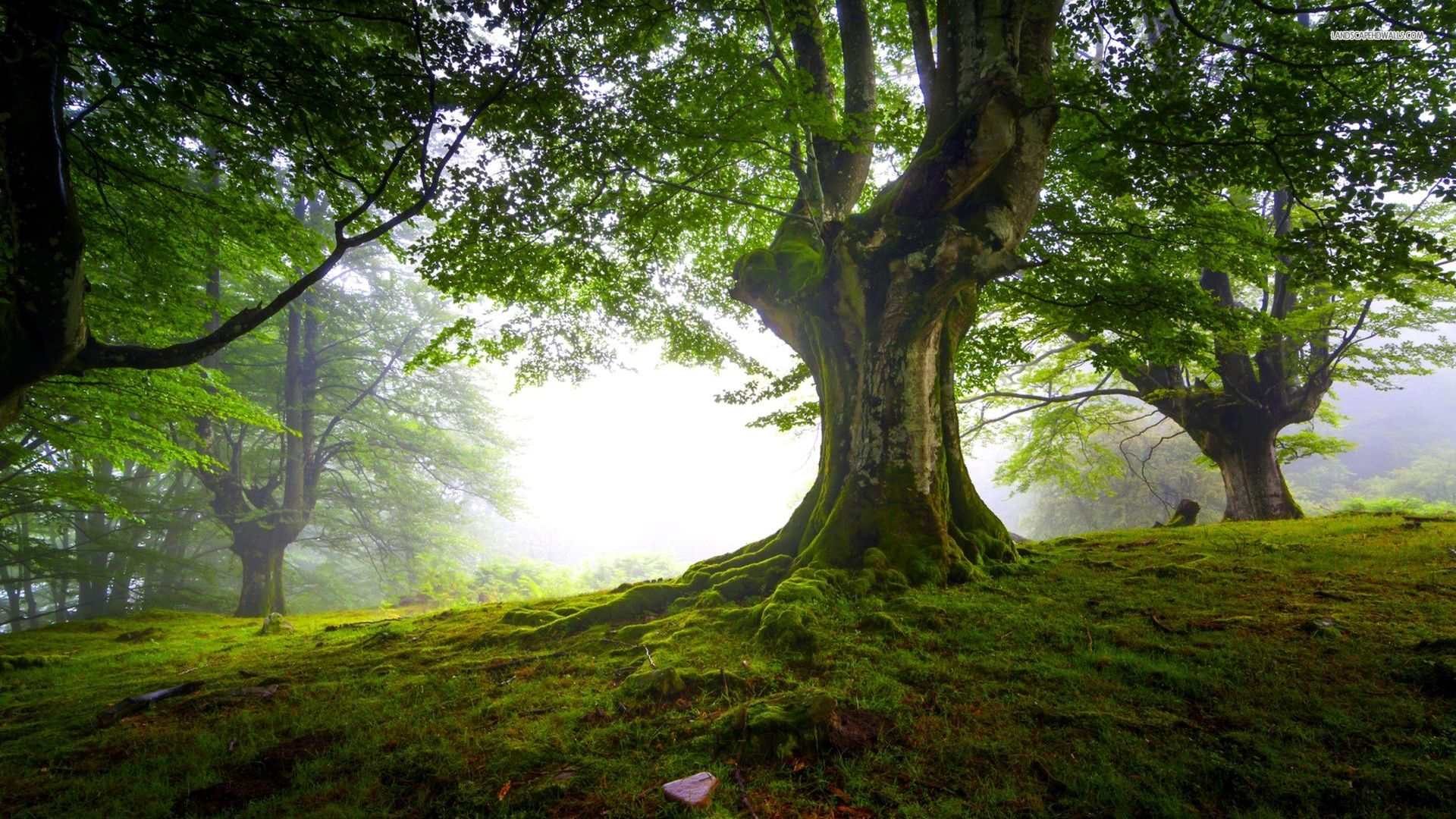 tree hd wallpapers - photo #42