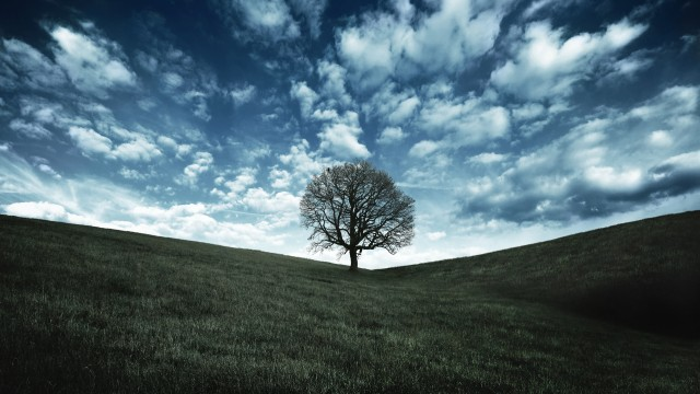 Tree wallpaper to use as background-9