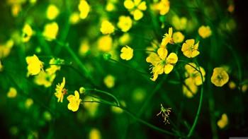 Yellow wallapaper 11