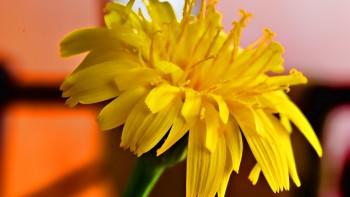 Yellow wallapaper 2