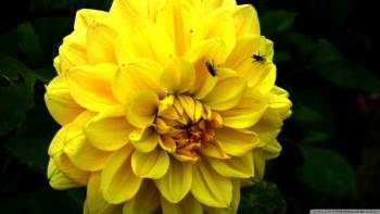 Yellow wallapaper 49
