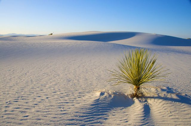 American White Sands Desert Is A Sublime Expanse That Should Not Exist--5