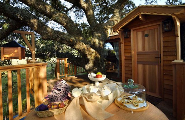 Blue Suit: A Beautiful Cabin Nestled In Trees In The Heart Of A Lavender Field--5