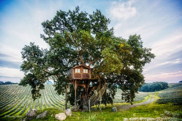 Blue Suit: A Beautiful Cabin Nestled In Trees In The Heart Of A Lavender Field-