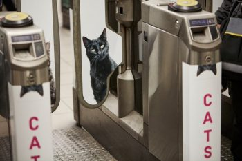 Farewell pubilicity! Cat posters invade the London Underground--2