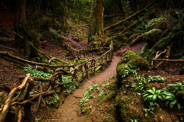 9 FORESTS THAT WILL MAKE YOU COMMUNE WITH NATURE--1