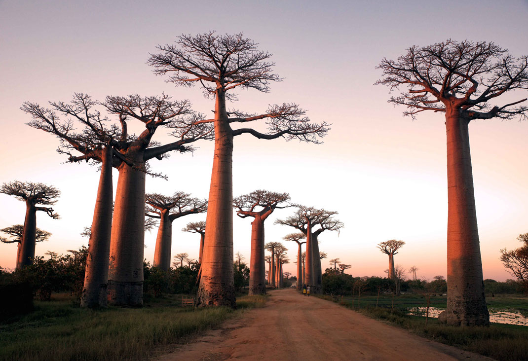 9 FORESTS THAT WILL MAKE YOU COMMUNE WITH NATURE--3