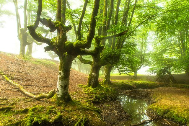 9 FORESTS THAT WILL MAKE YOU COMMUNE WITH NATURE--6