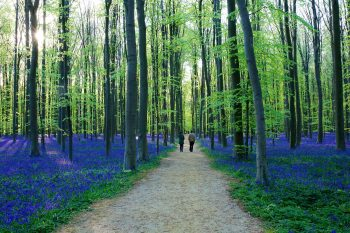 9 FORESTS THAT WILL MAKE YOU COMMUNE WITH NATURE--7