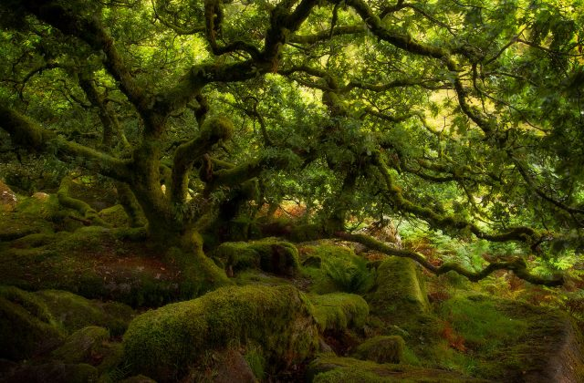 9 FORESTS THAT WILL MAKE YOU COMMUNE WITH NATURE--8