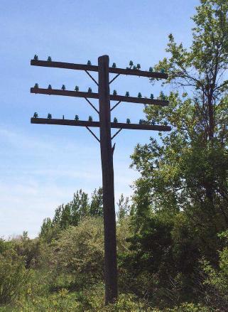 Long Distance Telephone Poles