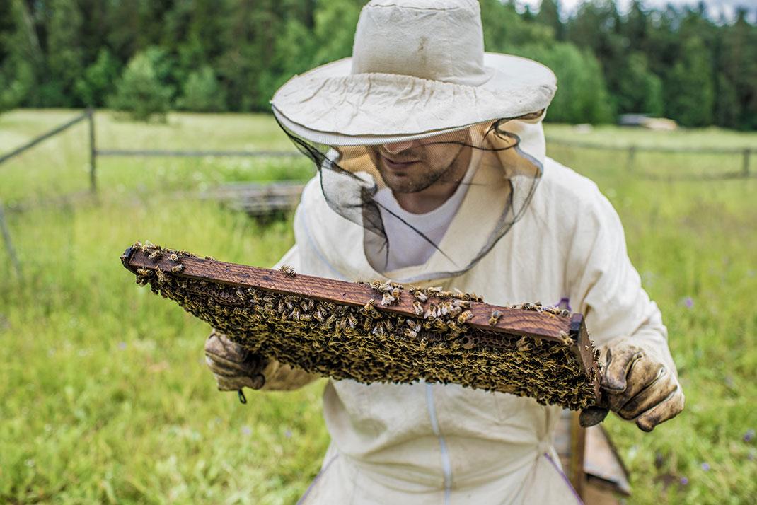 A beekeeper via Shutterstock