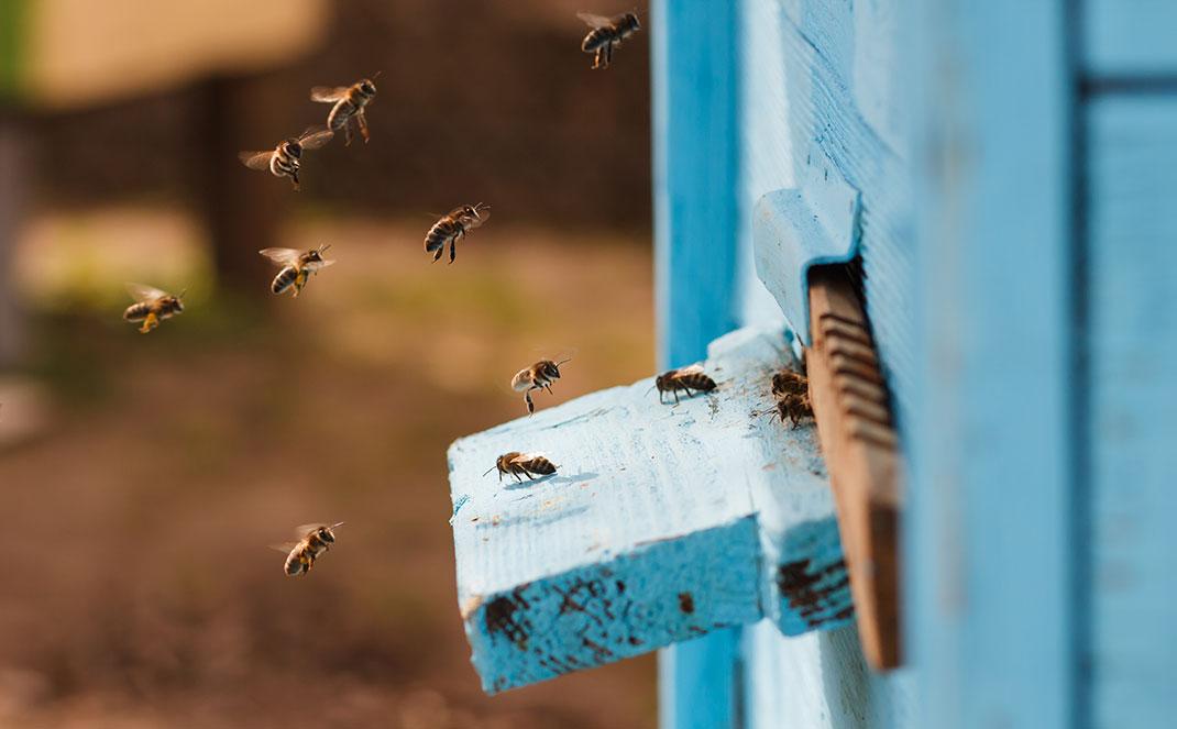 A hive via Shutterstock